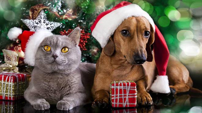 Regalare un cane o un gatto a Natale: le regole