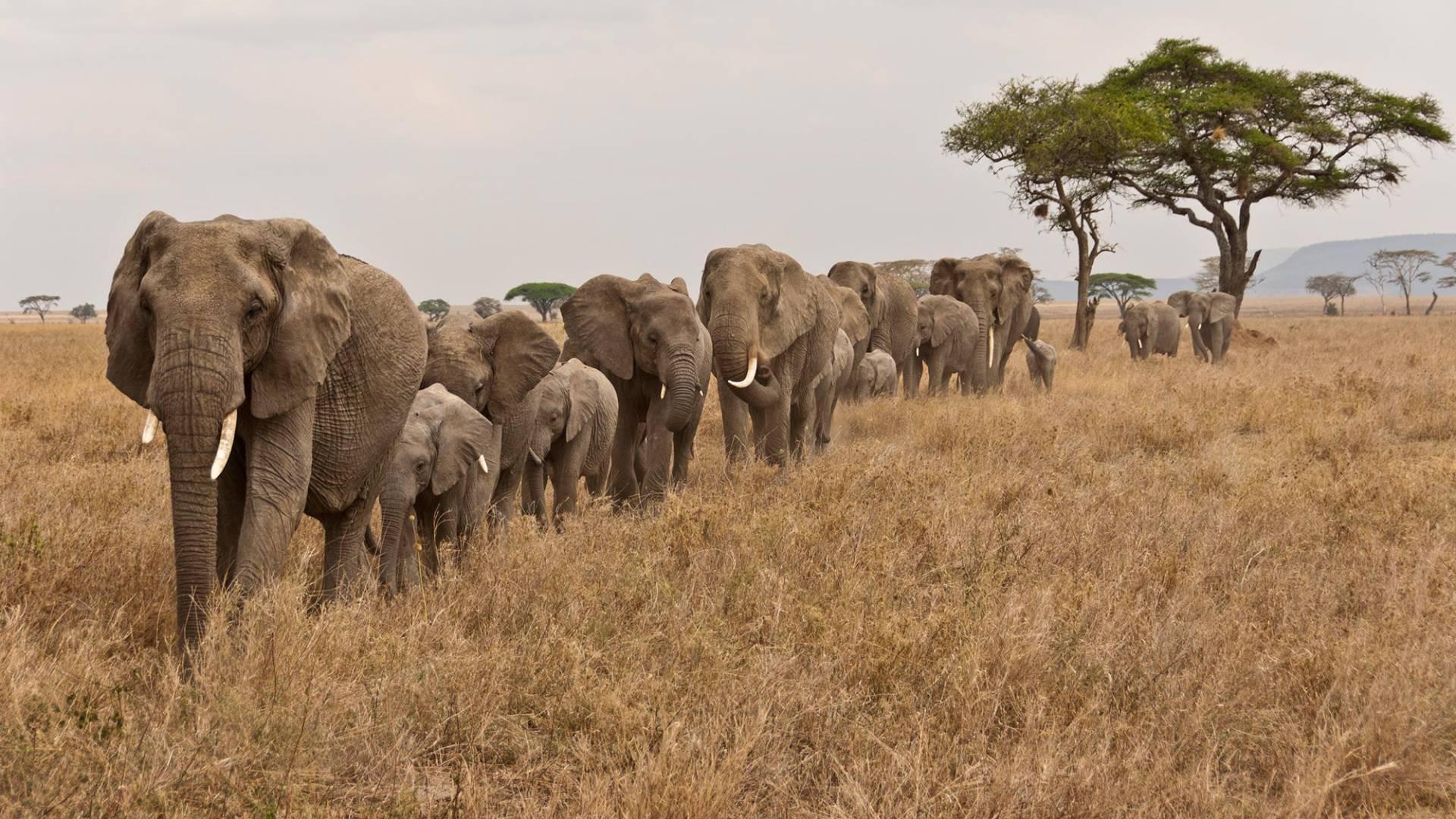 Di elefanti, delfini ed estinzioni