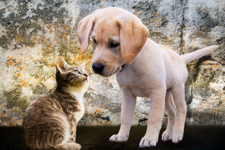 Canili: possono ripartire le adozioni
