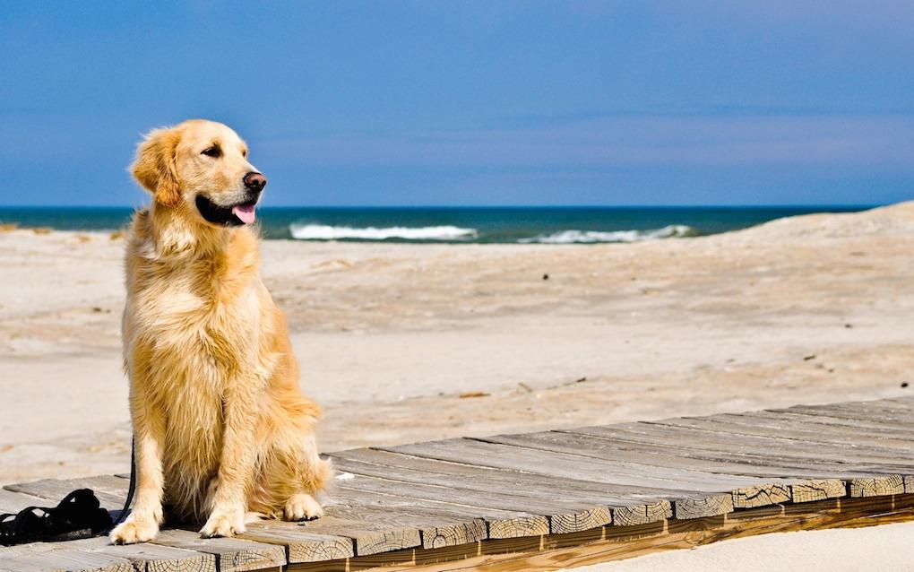 Cani in spiaggia: queste le regole